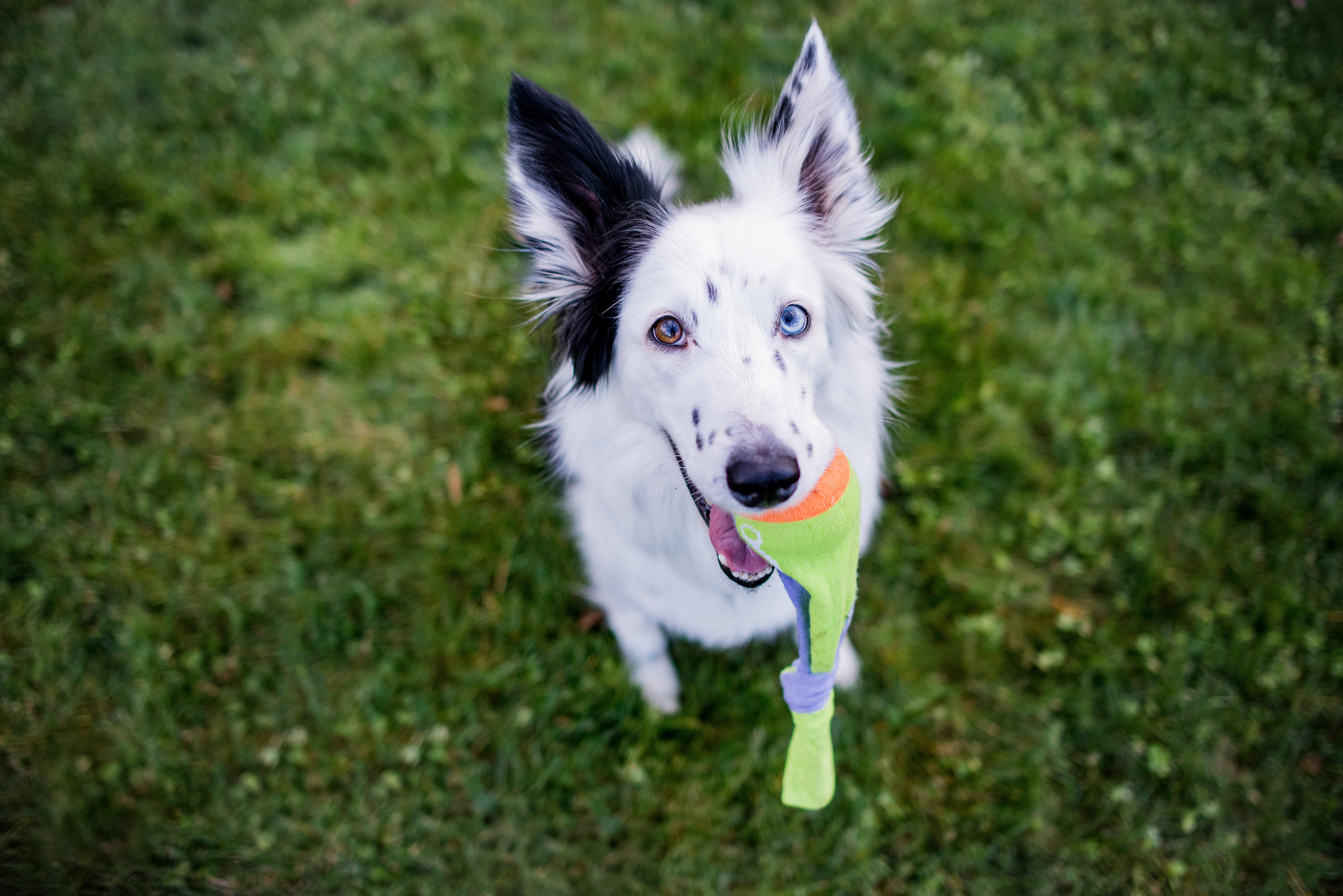 brinquedo do seu pet