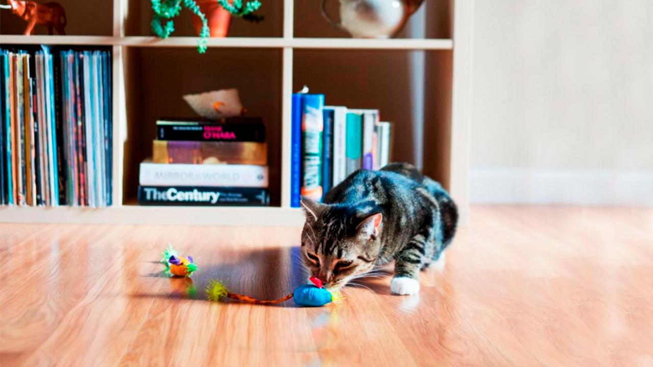 brinquedos para gastos