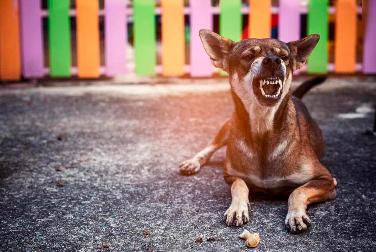 cão estressado