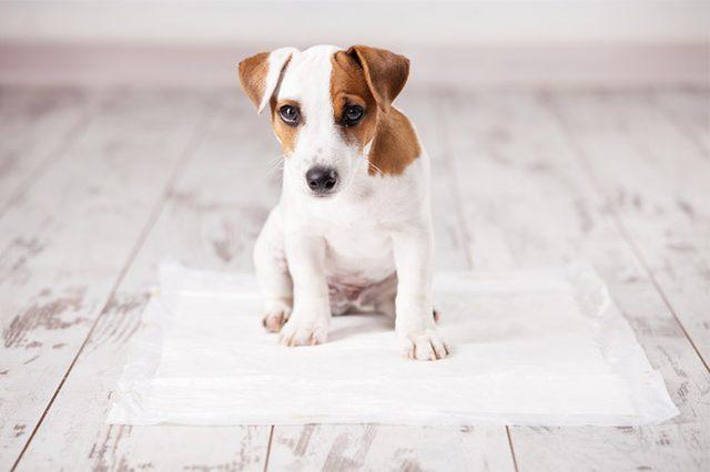 Clinical Pads, tapete higiênico para Cães que detecta alterações na urina que podem indicar doenças!